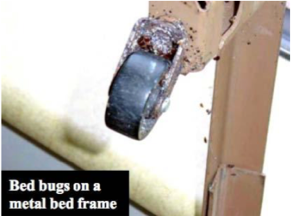 Where Do Bed Bugs Hide Use This Pest Professionals Checklist