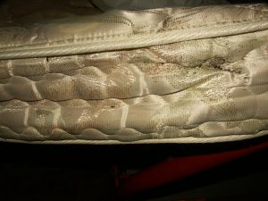 Bed bugs increases histamine levels at your home! Scary!